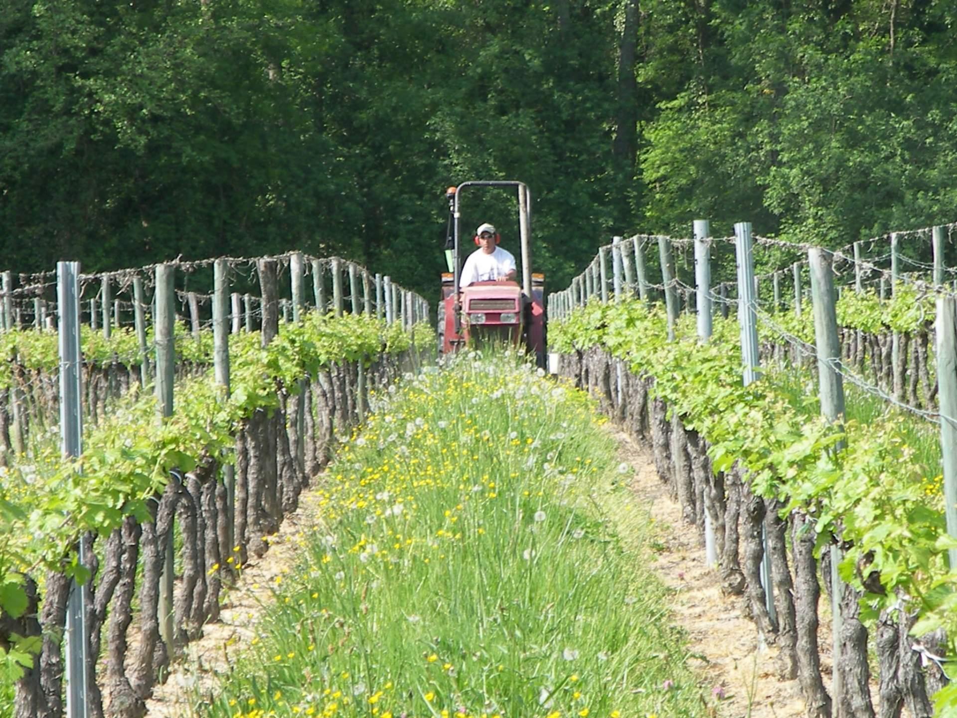 Nos routes des vins à Libourne