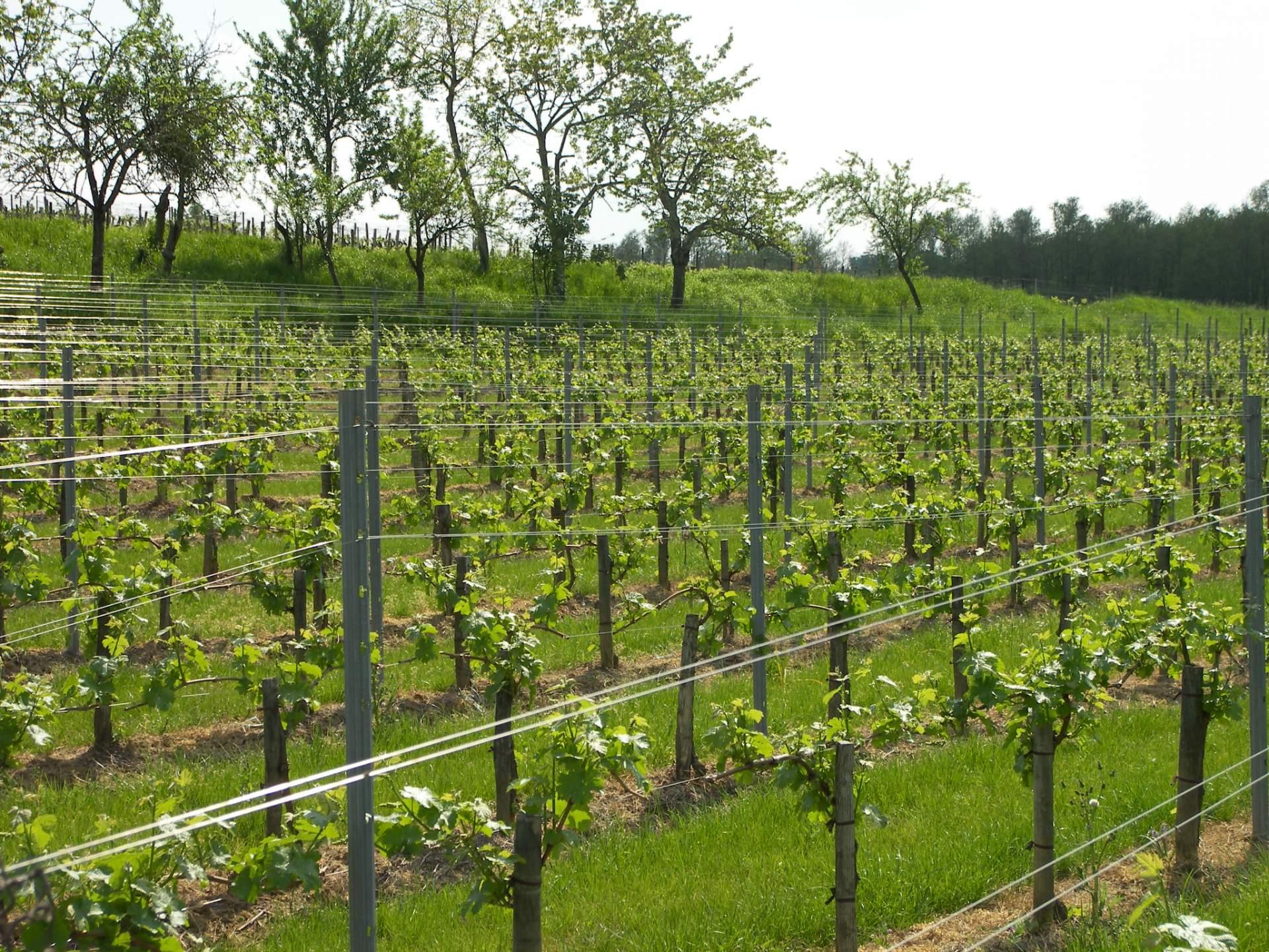 Notre propriété vinicole à Montagne