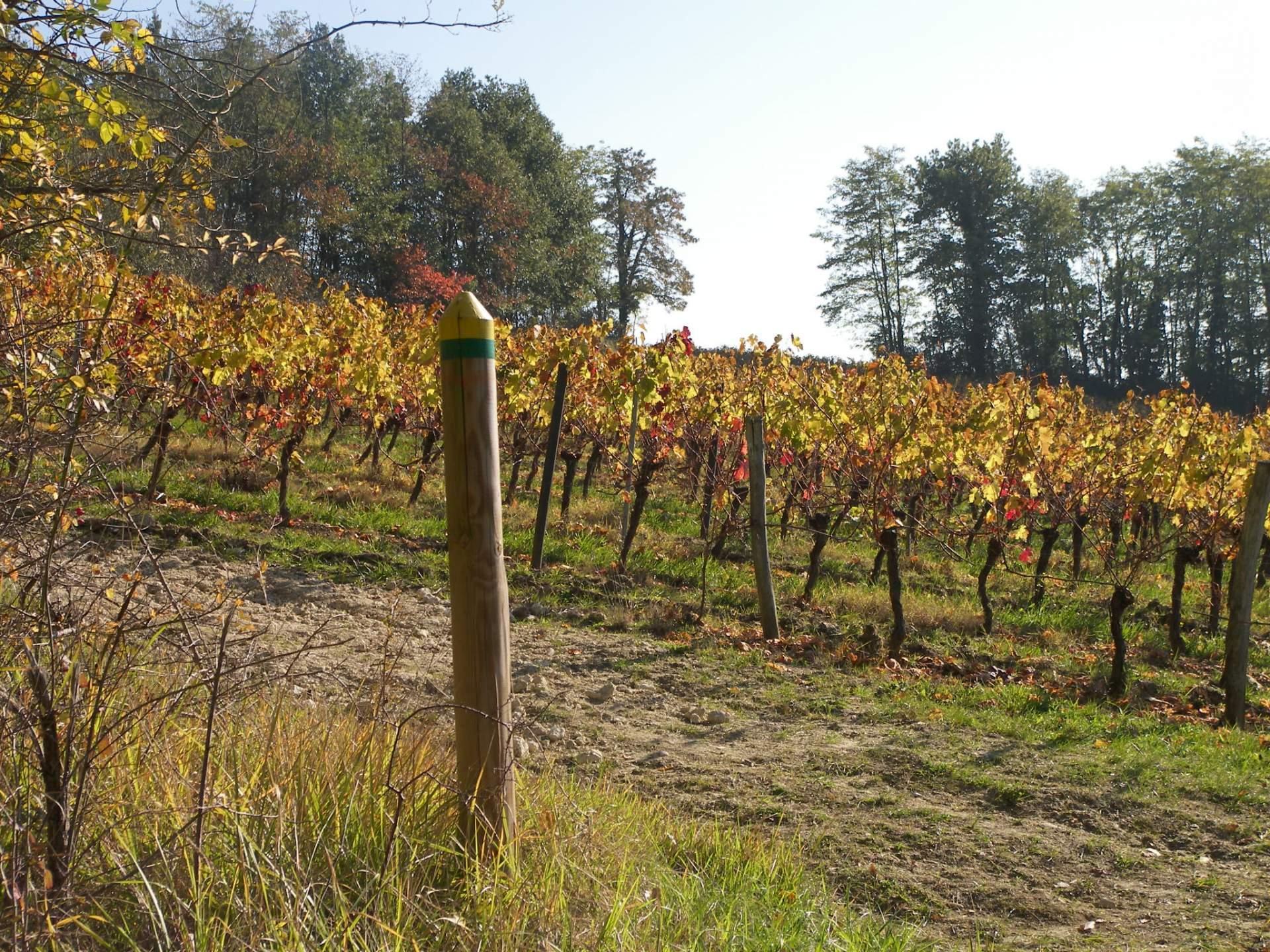 Notre culture de la vigne à Saint-Emilion
