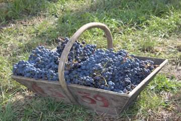 Vignobles Silvestrini